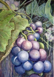 ENNISKILLEN GRAPES - 14 X 20 inches $325