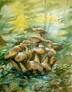 FOREST FUNGI 1 - 8 X 10 inches $100