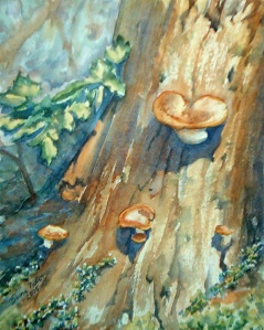 FOREST FUNGI 2 - 8 X 10 inches $100