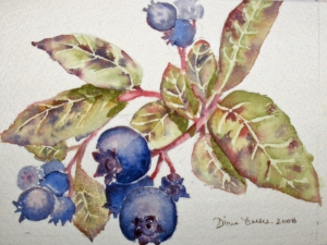 WILD BLUEBERRIES (STUDY)